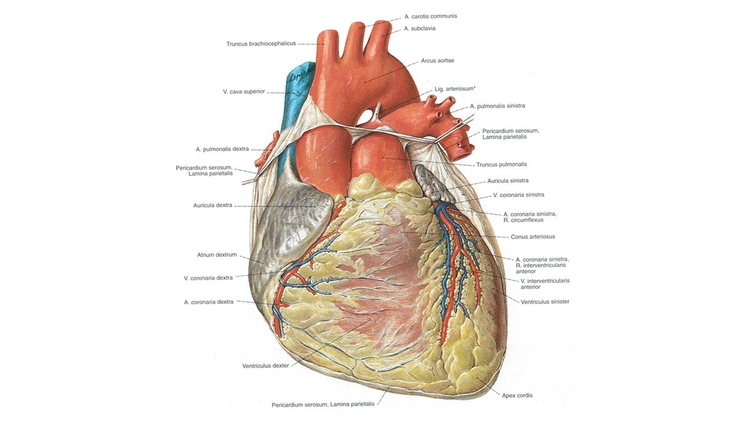 Herz - Klinik-Impuls
